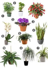 Heymama looks at non-toxic indoor plants. Green plants are natural air  detoxifiers, purifying the air inside your home while doing wonders for  your