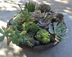 a bowl full of simple