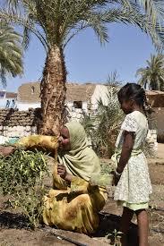 Kitchen Garden Foundation Om Habibeh Foundation Aga Khan Development Network
