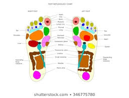 Foot Reflexology Images Stock Photos Vectors Shutterstock