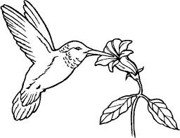 Small Picture Coloring Page Hummingbird Coloring Pages Coloring Page and