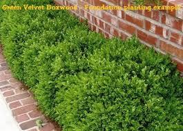 Boxwood Green Velvet Size 1