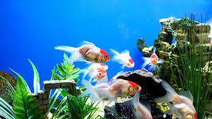 Aquarium Background Printable Koni Polycode Co Fish Tank