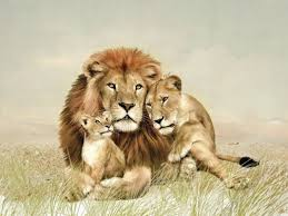 lion lioness and cub 1280x960