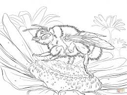 Buff Tailed Bumblebee Coloring Book - Animal - Pictures Of Bees ...