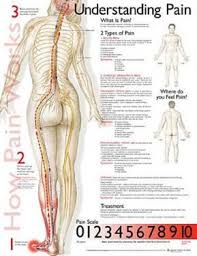 Affordable Medical Charts Posters For Sale At Allposters.com