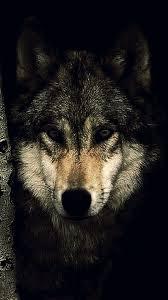 Wolf Wallpaper 4K Mobile Ideas 4K ...