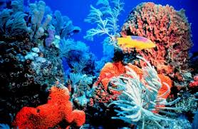 colorful coral reef wallpaper. Bright Colorful Coral Reef Intended Wallpaper