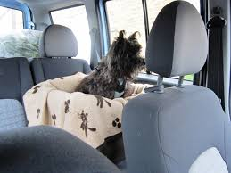 angus in his bergan car harness and jumbo dog car lookout seat