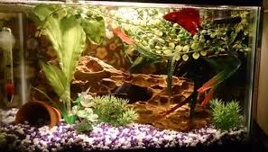 best led aquarium lighting reviews guide benefits of led aquarium lighting