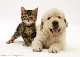 kittens and puppies. Wonderful And Summers Here And So Are Kittens Puppies   Inside And Puppies T
