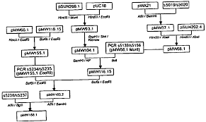 Microbiology Biochemical Test Flow Chart 56 Scientific