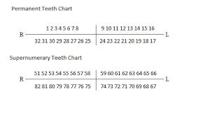 How To Count Teeth Chart How To Number Supernumerary Teeth Supernumerary Teeth