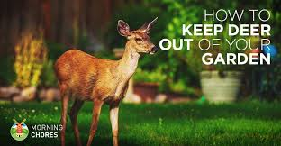 deer repellent 21 ways to keep out of your garden humanely