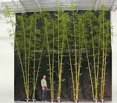 Small Picture Garden Design Garden Design with Bamboo Garden on Pinterest