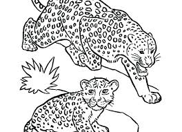 Animal Jam Snow Leopard Coloring Pages Stock Babies Page Of