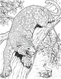 Small Picture Rainforest Jaguar Coloring Pages Baby To Download And Print For