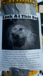 Lost Pet Flyer Maker Look at this dog 72