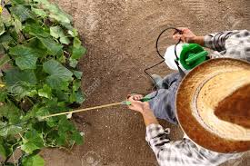 farmer working in vegetable garden pesticide sprays on plants top view and copy space