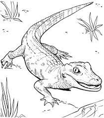 Small Picture Drawn crocodile colouring Pencil and in color drawn crocodile