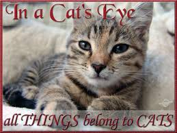 In A Cat S Eye All Things Belong To Cats Pictures Quotes Litle Pups