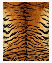 Tiger Pattern Beauteous Tiger Skin Pattern Children Children Clipart Tiger Clipart Tiger