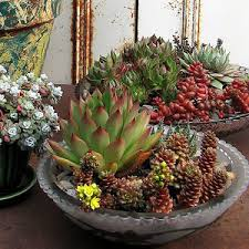 how to make a succulent garden. Perfect Succulent And How To Make A Succulent Garden