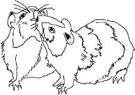 Small Picture Guinea Pig Mating Coloring Page Color Luna