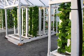 vertical hydroponic towers system