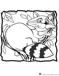 Small Picture Raccoon Coloring Page Woo Jr Kids Activities