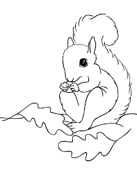 Flying Squirrel Colouring Page Coloring Page Of A Squirrel Flying