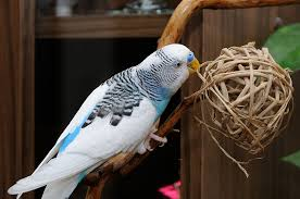 a twig ball for parrots