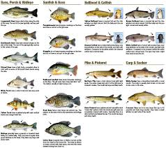 Freshwater Fish Chart Types Of Fish In Georgia A Selection Of Pins About Animals