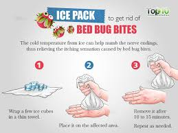 Ice Pack For Bed Bug Bites Bed Bug Bites Rid Of Bed Bugs