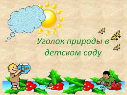 Презентация на тему Уголок природы в детском саду Младшие и  1 Уголок природы в детском саду