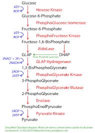 Week 9 Reflection Glycolysis Sachabiochem0001