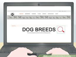 image led avoid crossbreeding as a dog breeder step 4