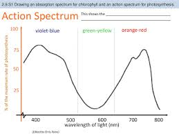 Action Spectrum 2 9 U2 Visible Light Has A Range Of Wavelengths With Violet
