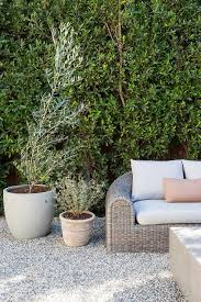 backyard potted olive trees design ideas