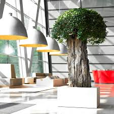 office greenery. Colourful And Exciting Plants Also Help To Liven Up An Office; Leading A Calmer Working Environment That\u0027s More Welcoming Enjoyable For Employees Office Greenery R