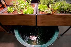 aquaponic gardening. media-based aquaponics aquaponic gardening d