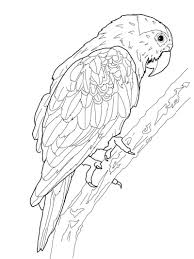 macaws that you can print pictrues free printable parrot coloring pages for kids