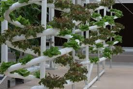 walt disney hydroponics