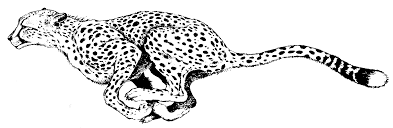 Cheetah Coloring Pages Running Coloringstar