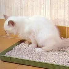 senior cat litter box.  Litter Low Sided Litter Box For Senior Cats On Senior Cat Litter Box