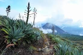 santa ana and yzalco volcanos stock photo image of flora bushes 35737118