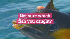 Chesapeake Bay Fish Identification Chart Fishing App That Identifies Fish Technology Org