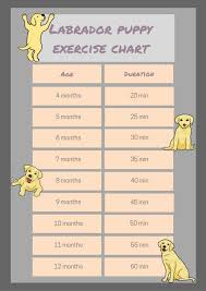 Dog Breed Exercise Chart Answered Your Questions About How Much Exercise Labradors Need