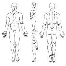 Free body diagram blank luxury body free download clip art free rh bodypart science blank human