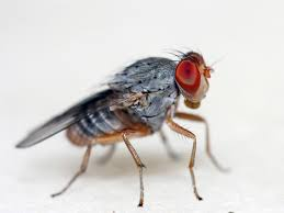 Small Black Flies In Kitchen My Great Challenge How To Get Rid Of And Prevent Fruit Flies In